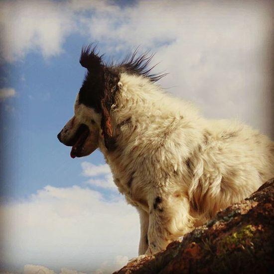 TafiDelValle el perro hippie