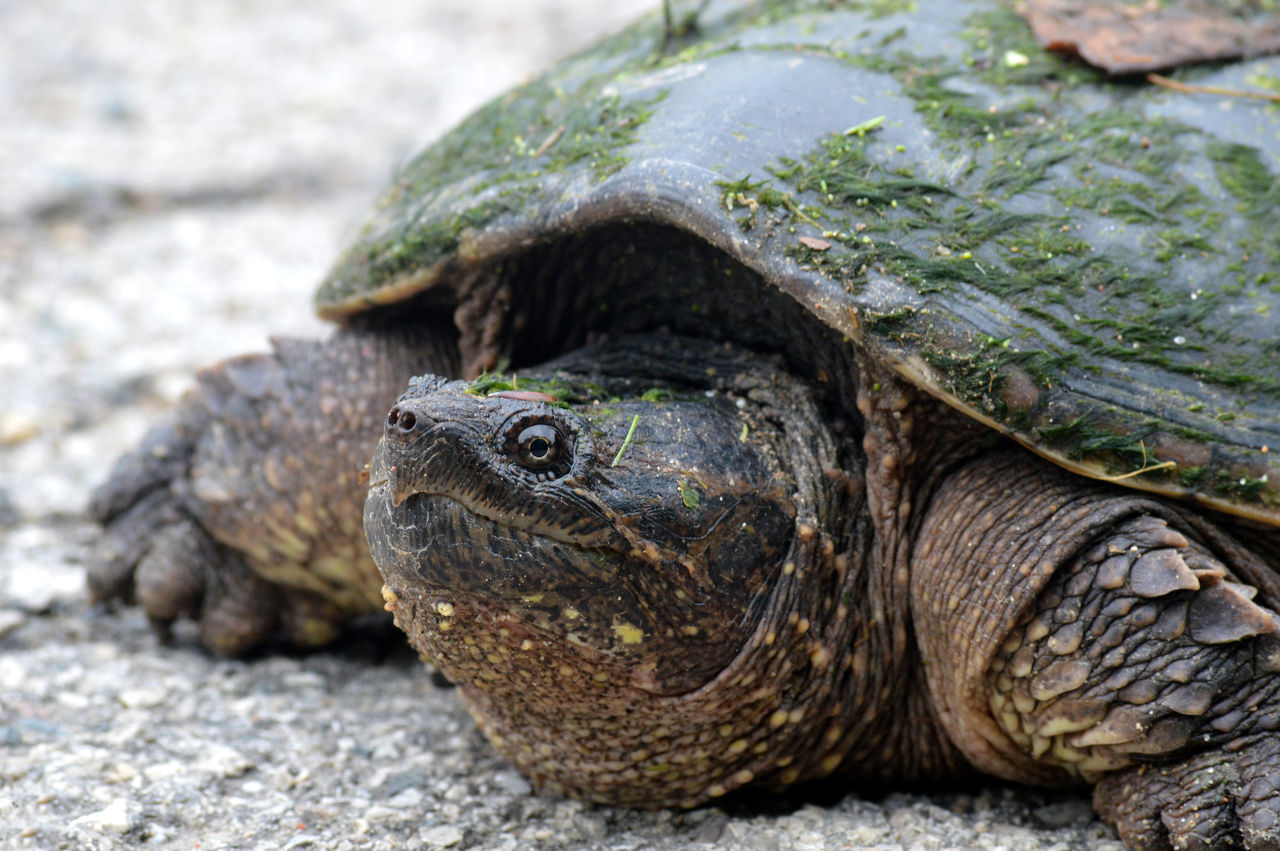 Close Up Of Turtle