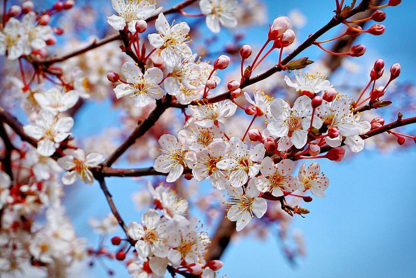 Beauty In Nature Blossom Nature Flower