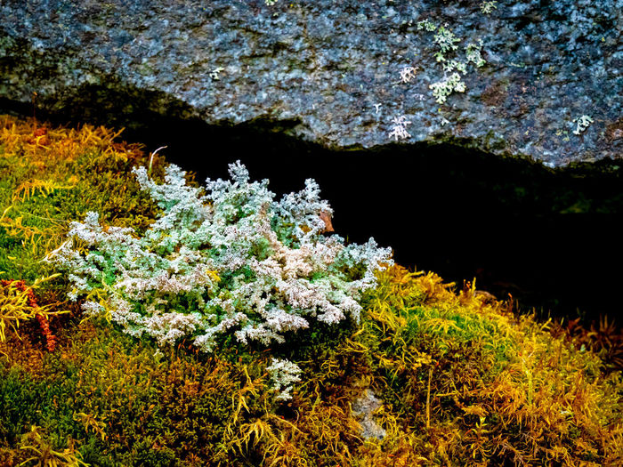 Nature Overgrown With Moss Cleft Cleft In The Rock Close-up Daylight Fels Moos No Poeple