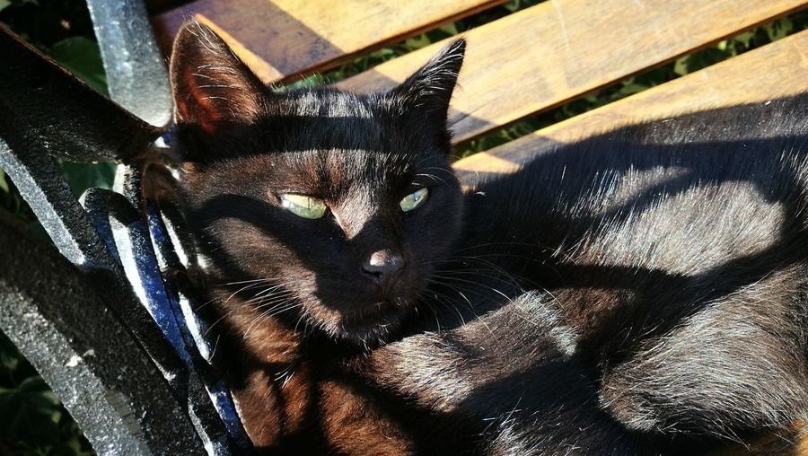 Animal Themes Domestic Animals Pets One Animal Sunlight Day