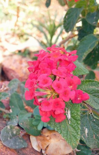 Nature Leaf Beauty In Nature Close-up Flower Freshness Flower Head Plant Outdoors Day Beauty In Nature Forest Photography