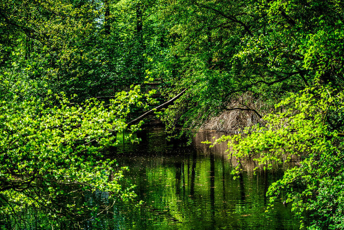 Forestwalk Ruhrgebiet Ruhrpott Ruhrpottromantik Nikon D750 Beauty In Nature Direction Environment Foliage Forest Green Color Growth Lake Land Lush Foliage Nature Outdoors Plant Rainforest Reflection Scenics - Nature Tranquil Scene Tranquility Tree Water WoodLand Relaxing Moments Green Greenery The Great Outdoors - 2018 EyeEm Awards