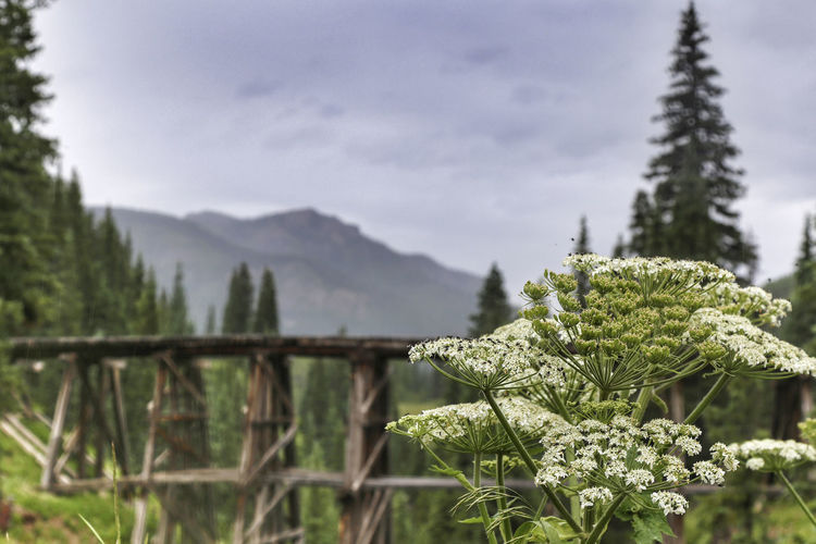 Beautiful rainy day in the mountains of Colorado Cloudy Colorado Exploring Green Rain Telluride Trees Wanderlust Wildflower Adventure Evergreen Focus On Foreground Forest Green Color Growth Kerry Estey Keith Landscape Mountain Mountains Outdoors Plant San Juan Mountains Sky Stormy Tranquility