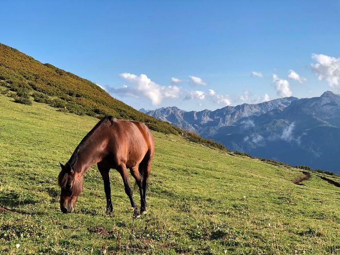 Horse Sochi