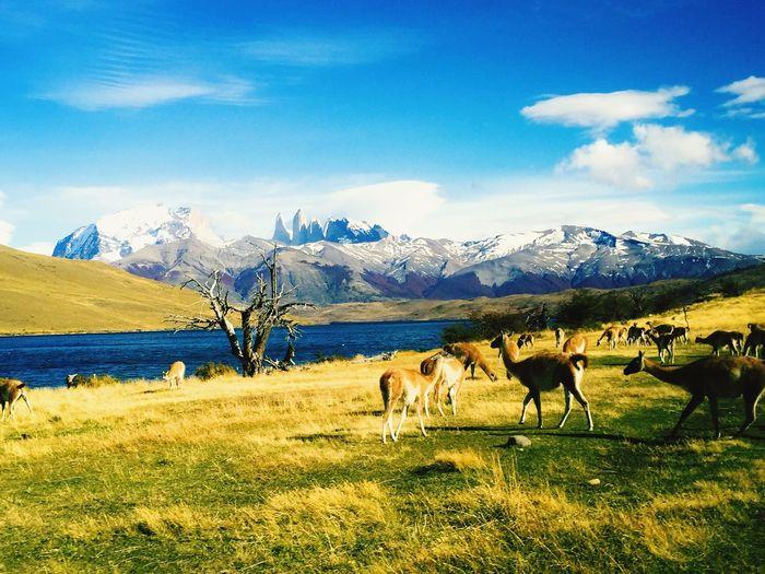Herd of deer on grassy land against blue sky