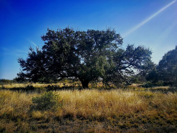 Tree Nature Sky Growth No People Outdoors Beauty In Nature Day Tranquility The Great Outdoors - 2017 EyeEm Awards EyeEmBestPics EyeEm Best Shots Landscape Huawei P9 Leica Huaweip9photos The Best Of Eyeem EyeEm Nature Lover EyeEm Best Shots - Nature The Best Eyeem Shot Tree Trees And Nature Leica Huawei P9 Coahuila, México
