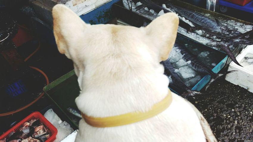 Buying A Yacht Share Your Adventure The Moment - 2015 EyeEm Awards Animals Fresh Produce Frenchbulldog Bulldog Dog Love Dog Pets Corner