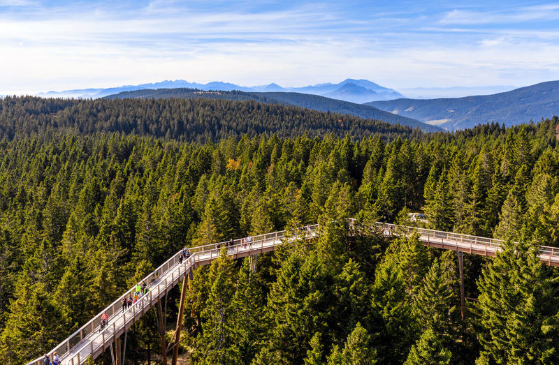 Wooden walkway above the treetops of a vast forest.