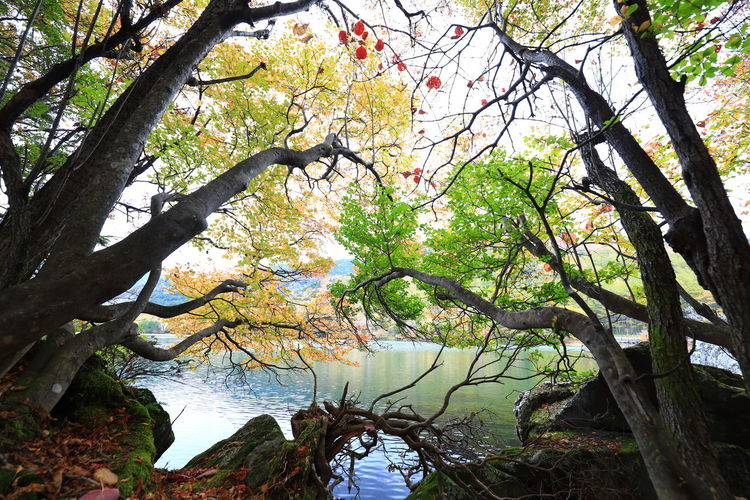 Hello World Tadaa Community Tree Plant Tranquility Beauty In Nature Tranquil Scene Outdoors Lake No People Scenics - Nature Water Red Leaves Nikko
