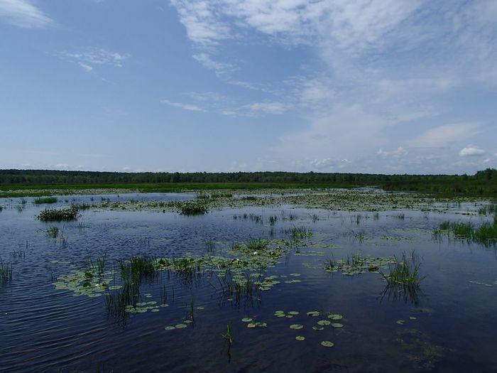 Marais de la Grande Baie (Parc national d'Oka) Water Sky Cloud - Sky Reflection Scenics - Nature No People Nature Beauty In Nature Wetland Outdoors Swamp