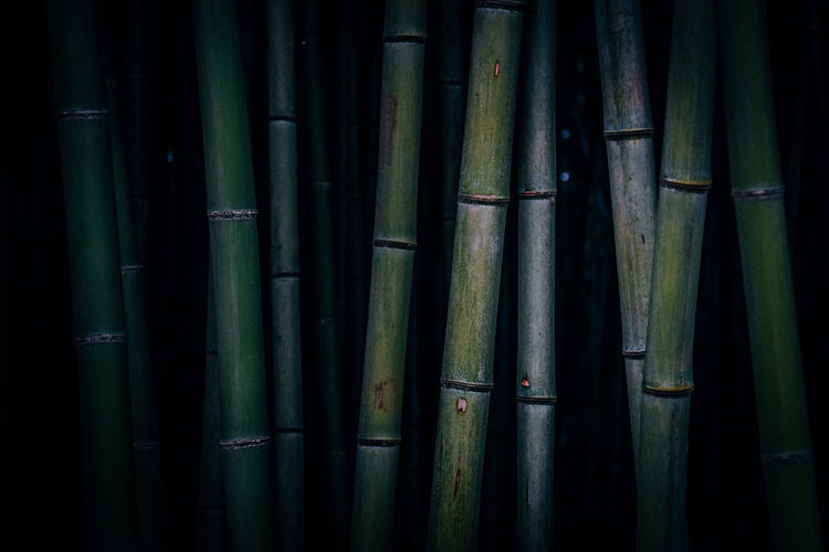 Full frame shot of bamboo