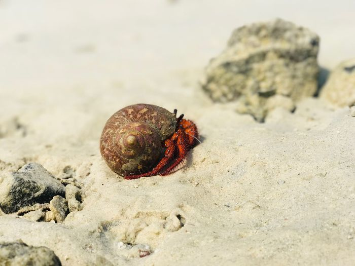 Crabs Hermit Crab EyeEm Selects Land Beach Sand Animal Wildlife Nature Day Animal Sea