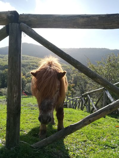 Domestic Animals Animal Themes Outdoors Nature Grass Poster Horse EyeEmNewHere Be. Ready. Perspectives On Nature