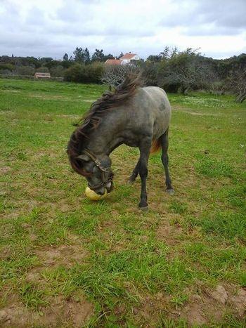 Cavalos Horse I Love Horses