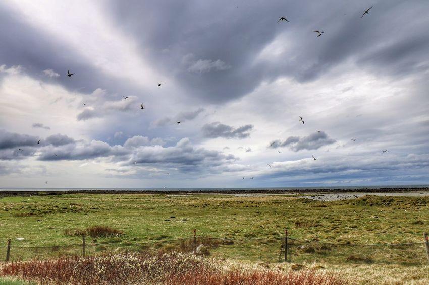 Bird Cloud - Sky Flock Of Birds Flying Grass Landscape Beauty In Nature Nature Sky Outdoors Day Rural Scene Suðurnes Hvalsnes