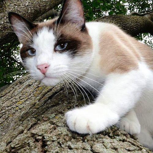My Cat Steven Kitty Beautifukitty Mix Nature Bestfriend