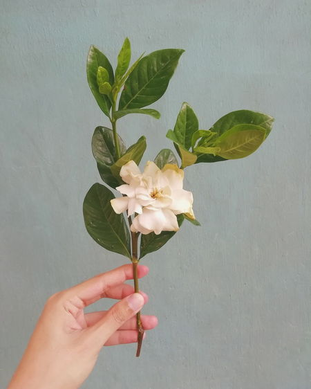Midsection of person holding flowering plant against wall