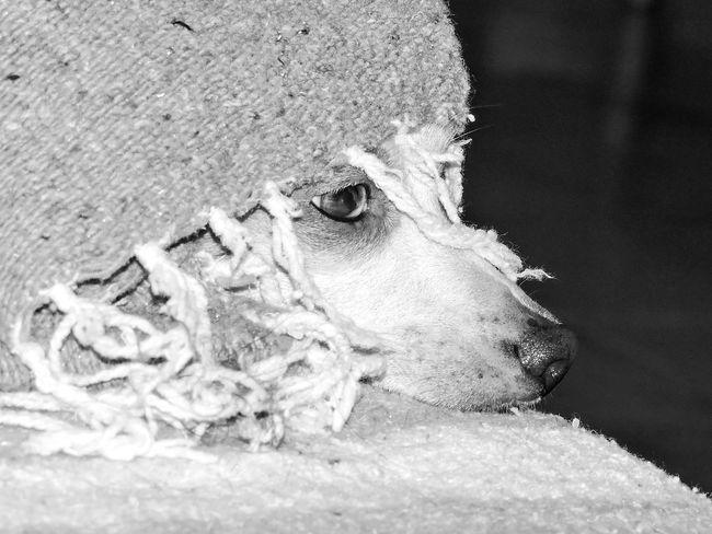 Animal Themes Close-up Dog Dogs Domestic Animals Magazhu No People Pets Relaxation Showcase August Yelapa