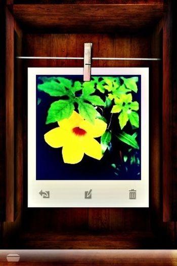 Hipstamatic Swakolab Flowers Plants
