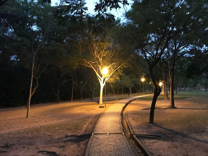 Tree Plant Nature Direction The Way Forward Illuminated No People Outdoors Park Footpath Beauty In Nature Road