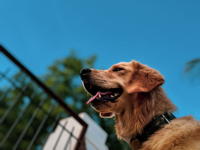Low angle view of dog looking away against blue sky
