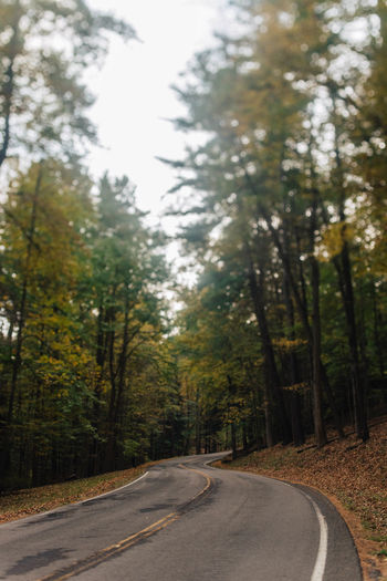 Tree Road Plant Transportation Day Tranquility Direction The Way Forward Nature No People Beauty In Nature Forest Growth Land Empty Road Diminishing Perspective Outdoors Country Road WoodLand Tranquil Scene Non-urban Scene Dividing Line Long Autumn Fall