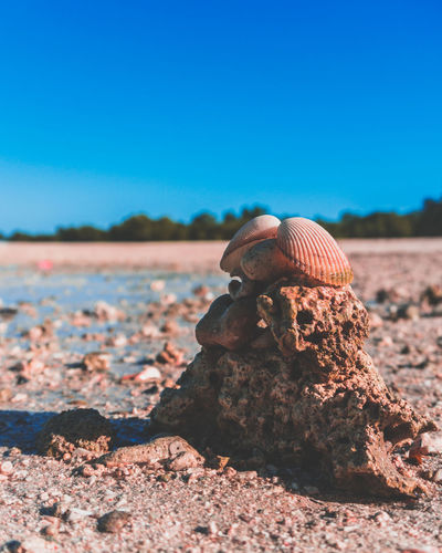 She sell seashells by the seashore. EyeEmNewHere Philippines Pink Seashore Animal Themes Beauty In Nature Blue Clear Sky Close-up Day Itsmorefuninthephilippines Nature No People Outdoors Seashells Sky Sunlight EyeEmNewHere Modern Workplace Culture Go Higher The Still Life Photographer - 2018 EyeEm Awards