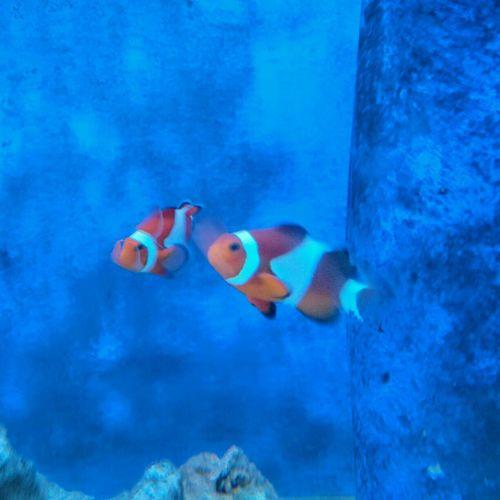 Fish Akvaryum Sleeping On That Akvarium