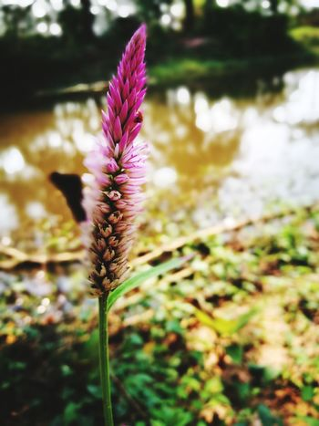 Flower Nature Fragility Beauty In Nature Purple Plant Freshness Flower Head Growth Wildflower Close-up
