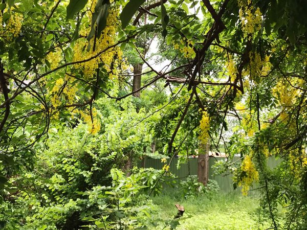 Tree Nature Green Color Growth Branch Outdoors Day Tranquility Beauty In Nature Leaf No People