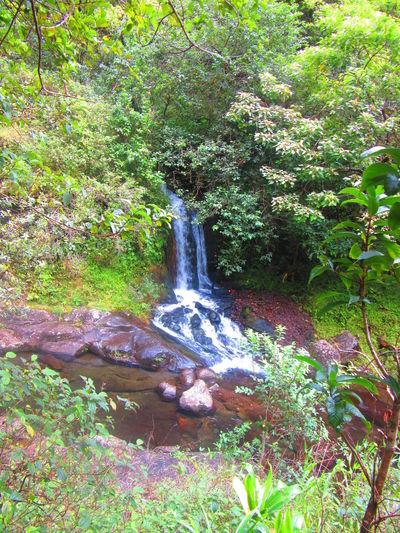 Hawaii Kauai Tropical Paradise Jurassic Pak Napali Coast Water Waterfalls Summer Exploratorium
