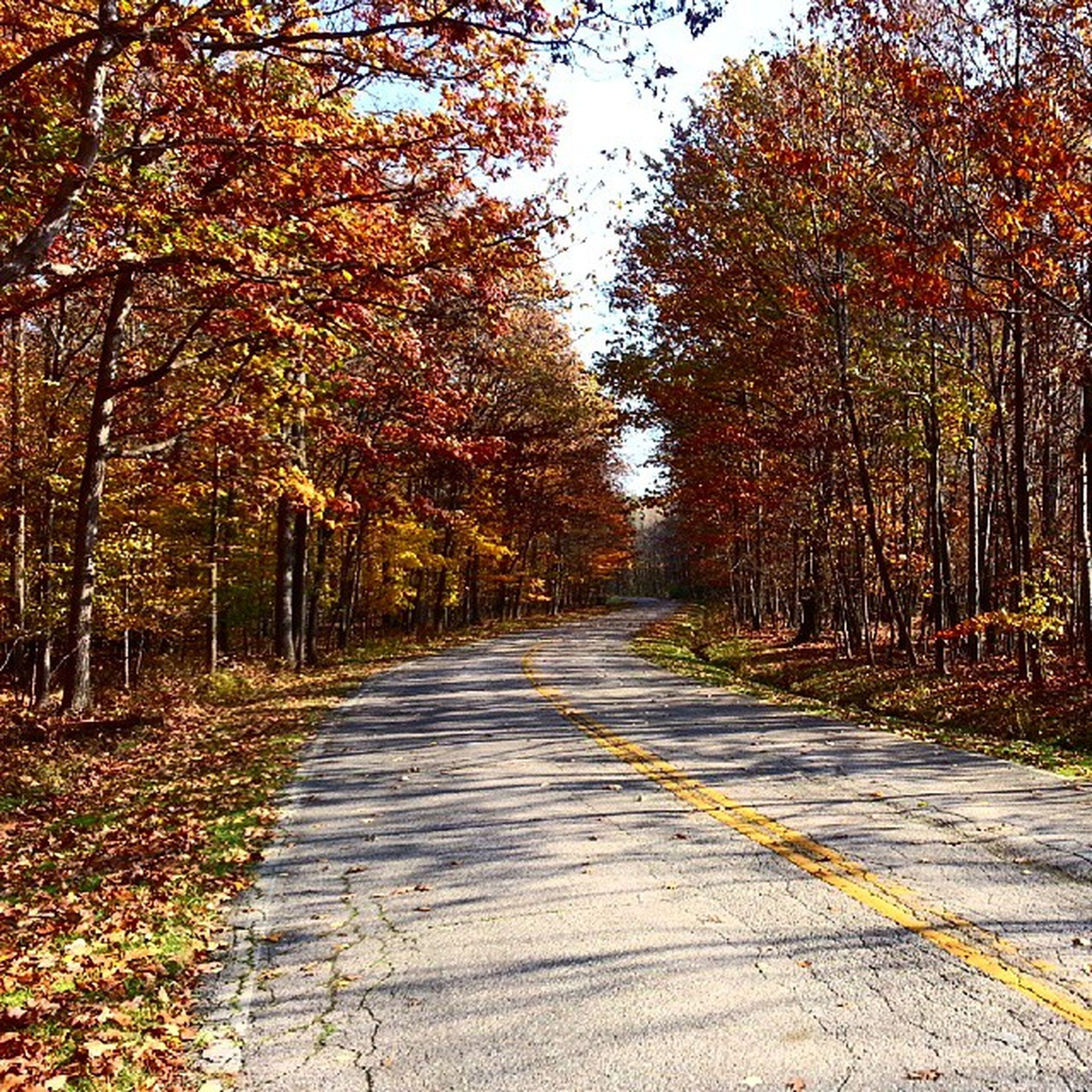 the way forward, tree, diminishing perspective, vanishing point, transportation, road, tranquility, autumn, nature, tranquil scene, empty road, growth, forest, long, country road, empty, asphalt, beauty in nature, day, outdoors
