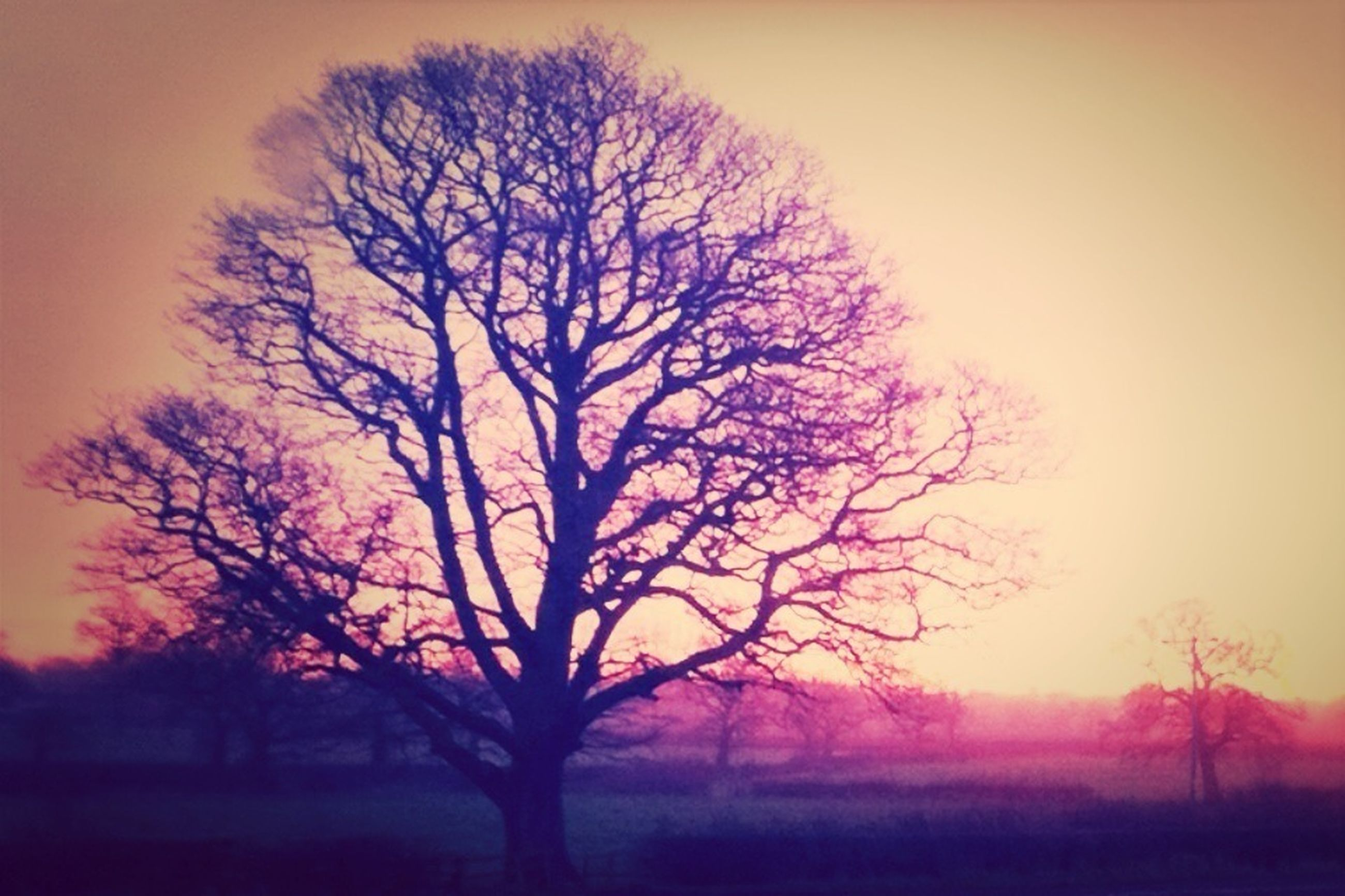 bare tree, tree, sunset, silhouette, tranquility, tranquil scene, beauty in nature, scenics, branch, landscape, nature, field, clear sky, sky, orange color, idyllic, dusk, non-urban scene, growth, outdoors