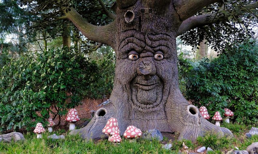 Attraction theme park the Efteling, Kaatsheuvel, the Netherlands Plant Tree Art And Craft Sculpture Representation Statue Nature Creativity Human Representation Growth Craft Day No People Park Outdoors Male Likeness Architecture Park - Man Made Space Stone Material