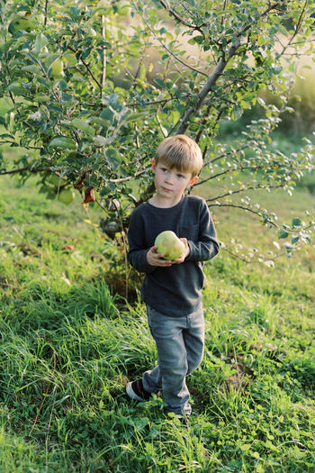 Full length of boy holding apple in field