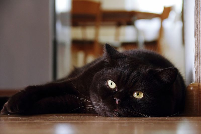 One more cat's face😻 Cat Black Color Looking At Camera Laziness Animal Themes Domestic Cat Eyes