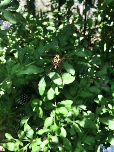 Patience Spider Spiderweb Web Webstagram Always Happy Bali