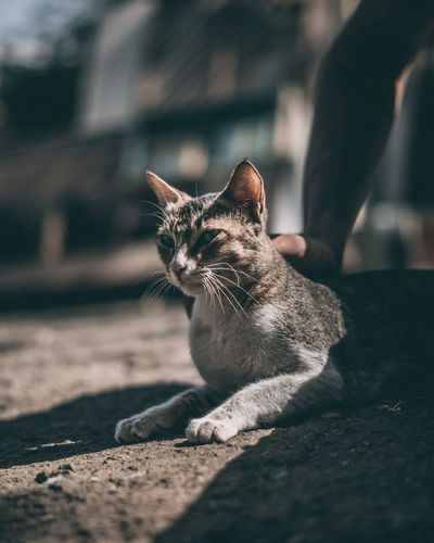 Shadow. Cat Cats Cats Of EyeEm Catsofinstagram Catsagram Bokeh Bokeh Photography Bokehlicious Nature Nature Photography Nature Photography Pets Portrait Domestic Cat Feline Sitting Leopard Cute Kitten Tabby Pet Bed Cat At Home Domestic Animals Whisker Stray Animal Undomesticated Cat Young Animal