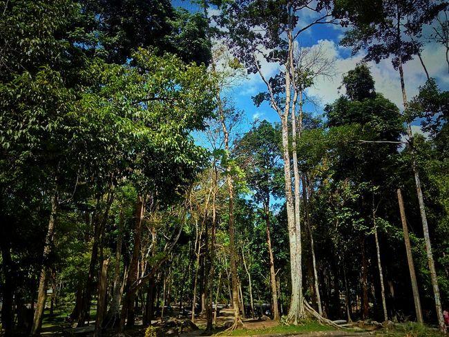 Beauty Of Nature Beauty Of Tree Tree And Sky Tree In Nature Tree Nature Green Color Sky