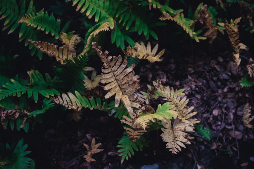 Fern Hill Autumn Beauty In Nature Change Close-up Coniferous Tree Day Ferns Focus On Foreground Green Color Growth High Angle View Land Leaf Leaves Nature No People Outdoors Plant Plant Part Selective Focus Tranquility Tree