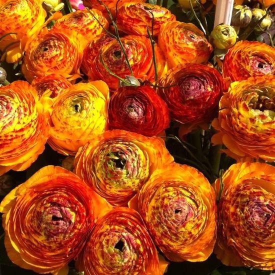 blumingday Flower Lobostudio Lobo_flowers