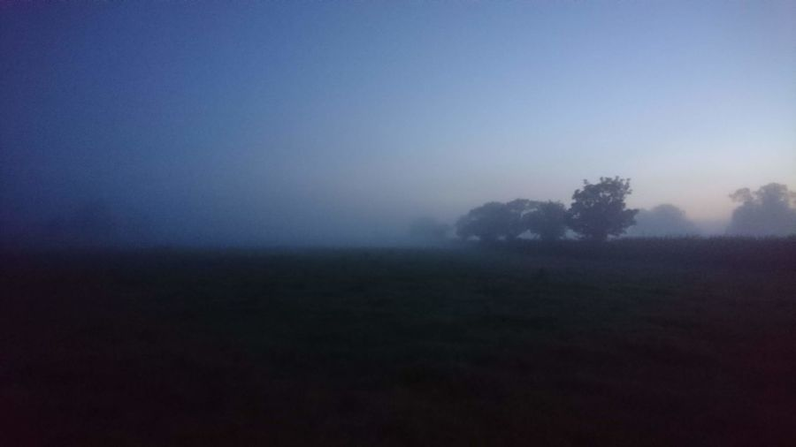 Rural Rural Scene Tree Fog Rural Scene Winter Dawn Cold Temperature Field Sky Landscape Grass Foggy Sunrise - Dawn Atmospheric Mood Tranquil Scene Mist Morning Non-urban Scene Weather Tranquility Countryside Calm