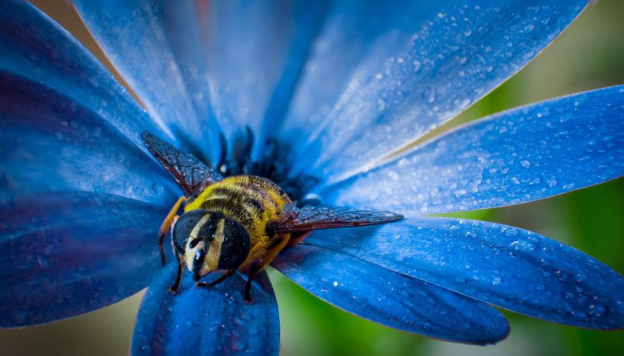 Blue Close-up
