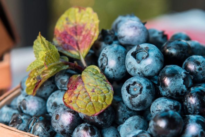 Summer's Greatness! Check This Out Taking Photos Enjoying Life Relaxing Berry Photography Fruit Berries Food Photography Foodphotography Food Porn Blueberries Food The Essence Of Summer Stockphoto Still Life Photography StillLifePhotography Still Art Stock Image Stock Photo Stock Photography Stockphotos Still Life Stockphotography