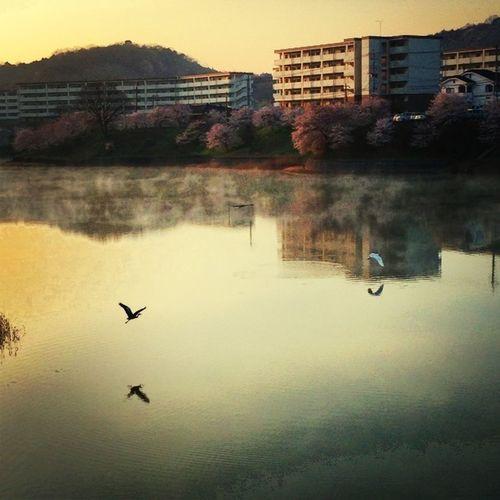Scenery Shots Photo