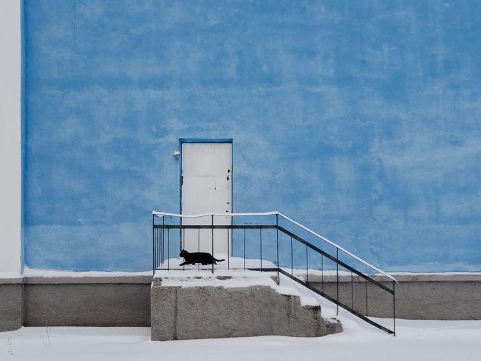 Black cat by door of blue building during winter