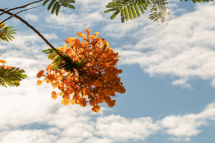 Low angle view of flowering plant against cloudy sky