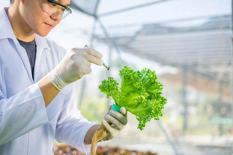 Midsection of botanist examining vegetable at greenhouse