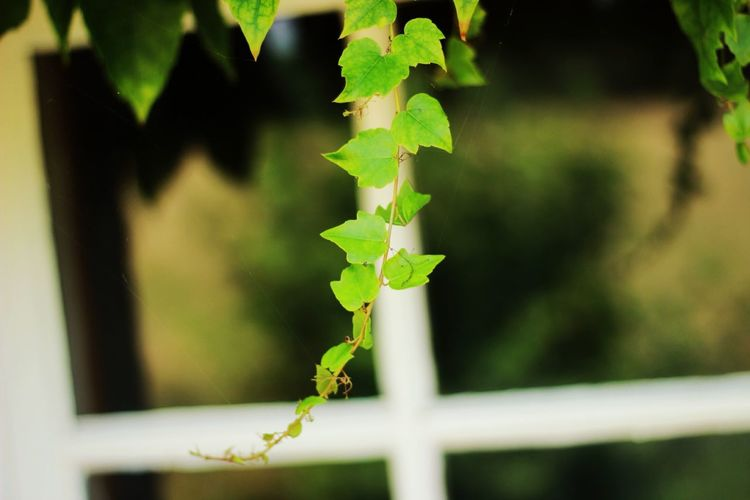 Close-up Day Focus On Foreground Fragility Green Color Growth Leaf Nature No People Outdoors Plant Window